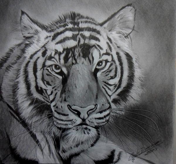 Desenhos Realistas do ano de 2010 - Aulas de Desenho Para