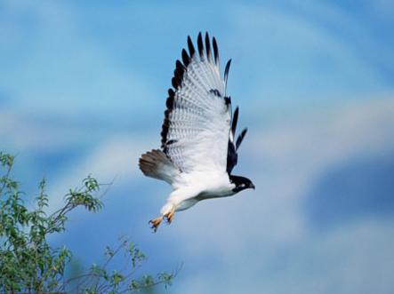 pássaro em vôo