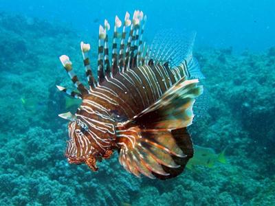 peixe exotico