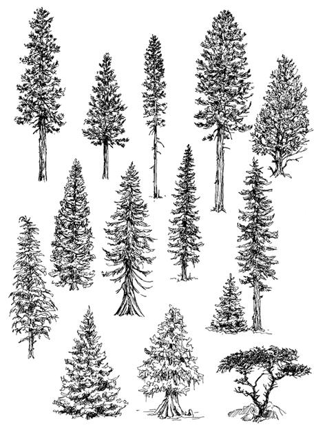 Como Desenhar árvores Aulas De Desenho Para Iniciantes