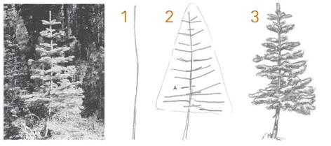 Como Desenhar Arvores Aulas De Desenho Para Iniciantes