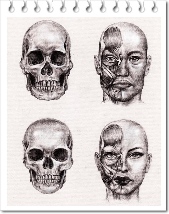 25 anatomia Estudo Desenhos por Veri Apriyatno - Tutorial para Iniciantes 10