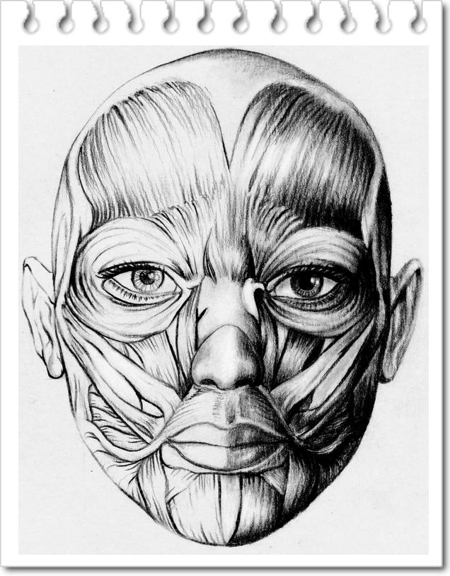 12 Desenhos De Estudo De Anatomia Tutorial Para