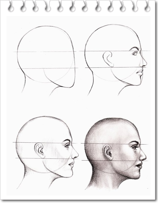 Line Drawing Of Face Profile : Desenhos de estudo anatomia tutorial para