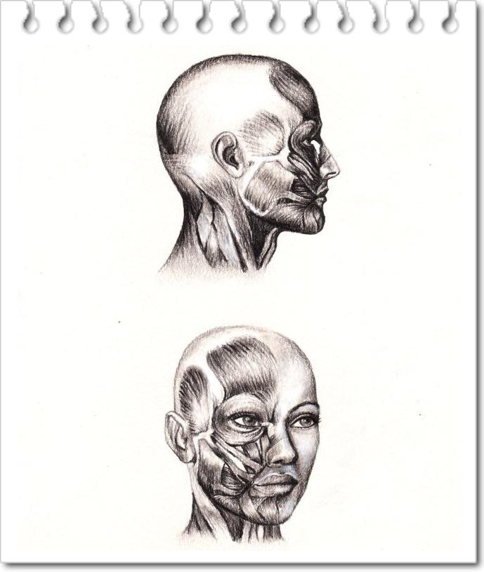 25 anatomia Estudo Desenhos por Veri Apriyatno - Tutorial para Iniciantes 9