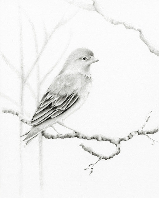 beautiful-bird-pencil-drawing