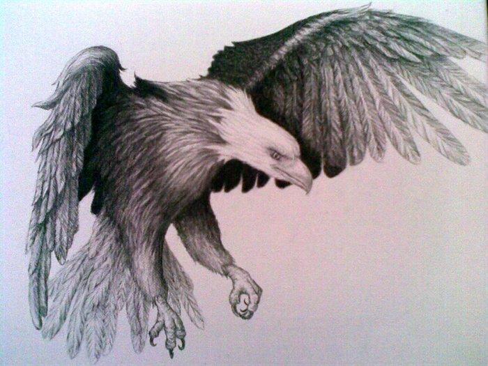 eagle-pencil-drawing-cye-wright