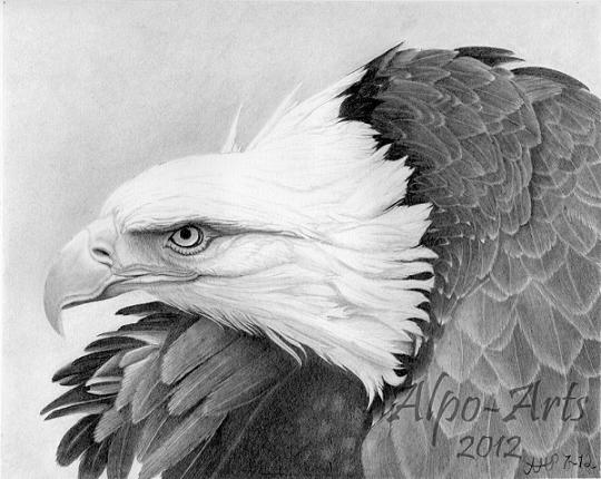 eagle-pencil-drawing