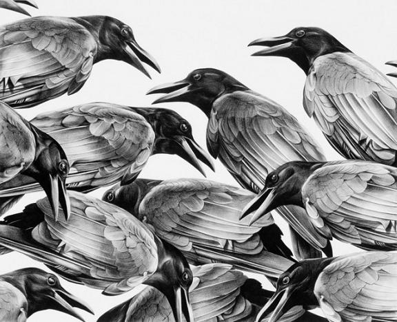 realistic-crow-pencil-drawing