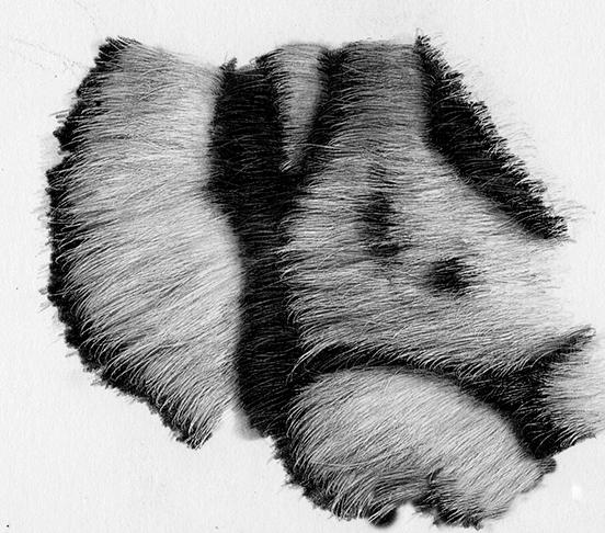 como desenhar as listras do tigre 12