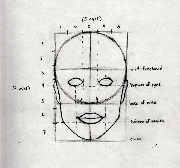 As proporções básicas da cabeça humana