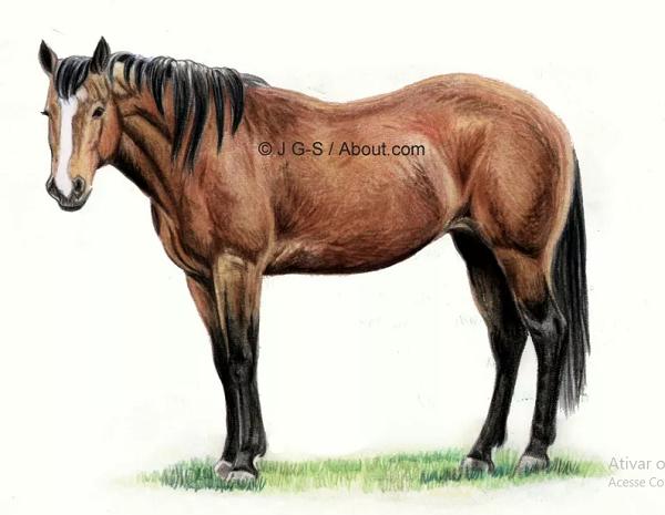 um cavalo desenhado com lápis de cor