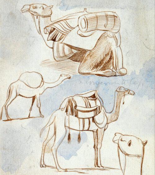 Edward Lear, estudos de esboço de camelos. Aquarela e tinta, 1867
