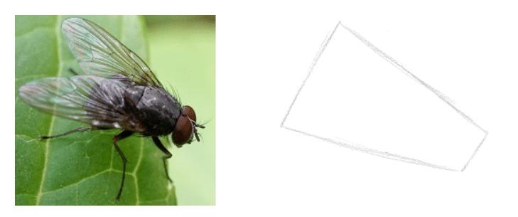 Lição 2 - Aprenda a ver de forma diferente - formas simples - Esboço da Estrutura Geral