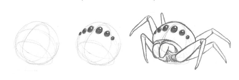 Lição 3 Indo do 2D para o 3D - USANDO LINHAS DE CONTORNO - aranha